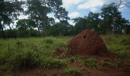Campi nei dintorni delle varie orse (fattorie) di Fazenda Extrema